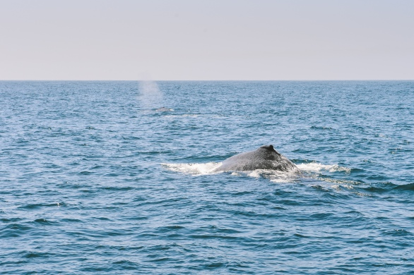 Whale spotting in Santa Barbara.