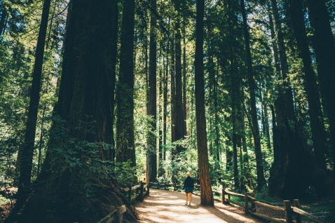 Henry Cowell Redwoods state park, north of Santa Cruz.